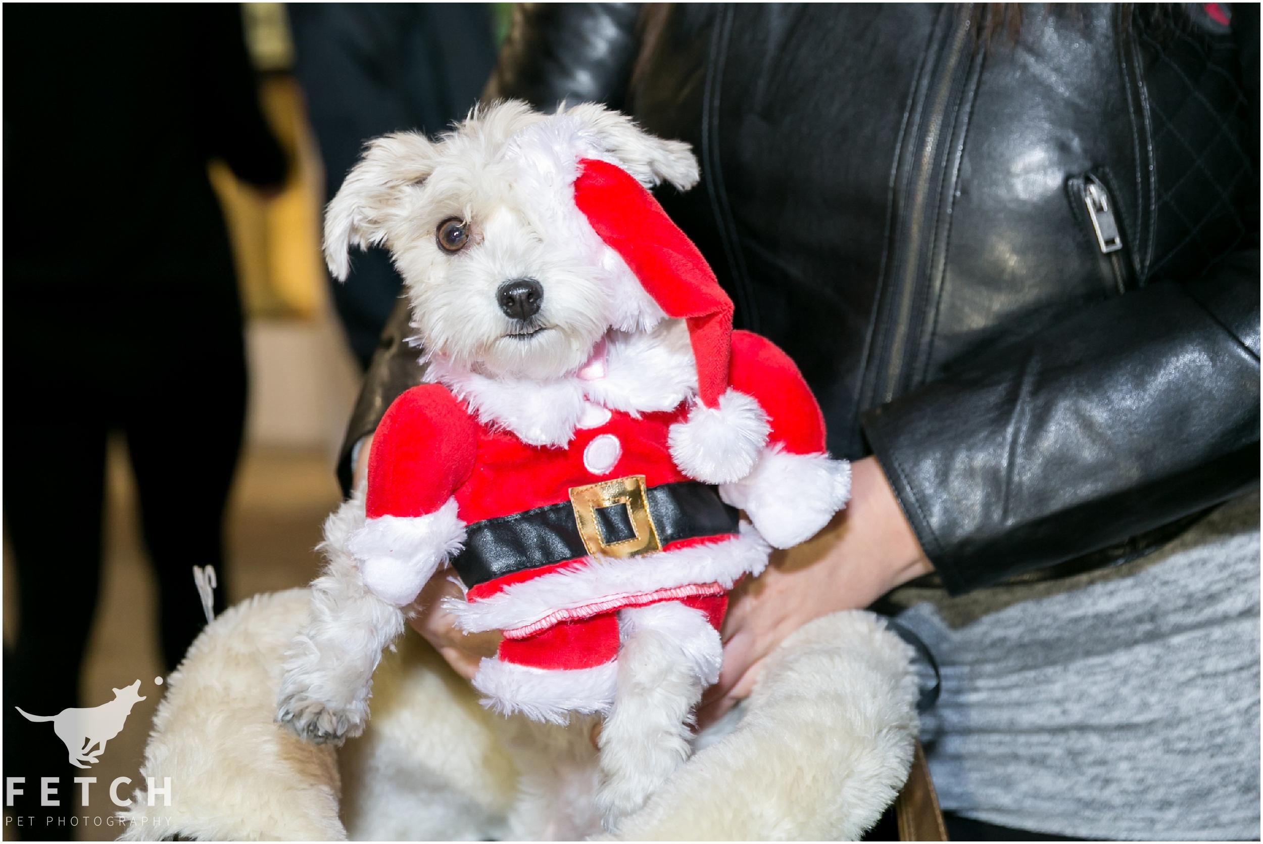 puppy-dressed-as-santa