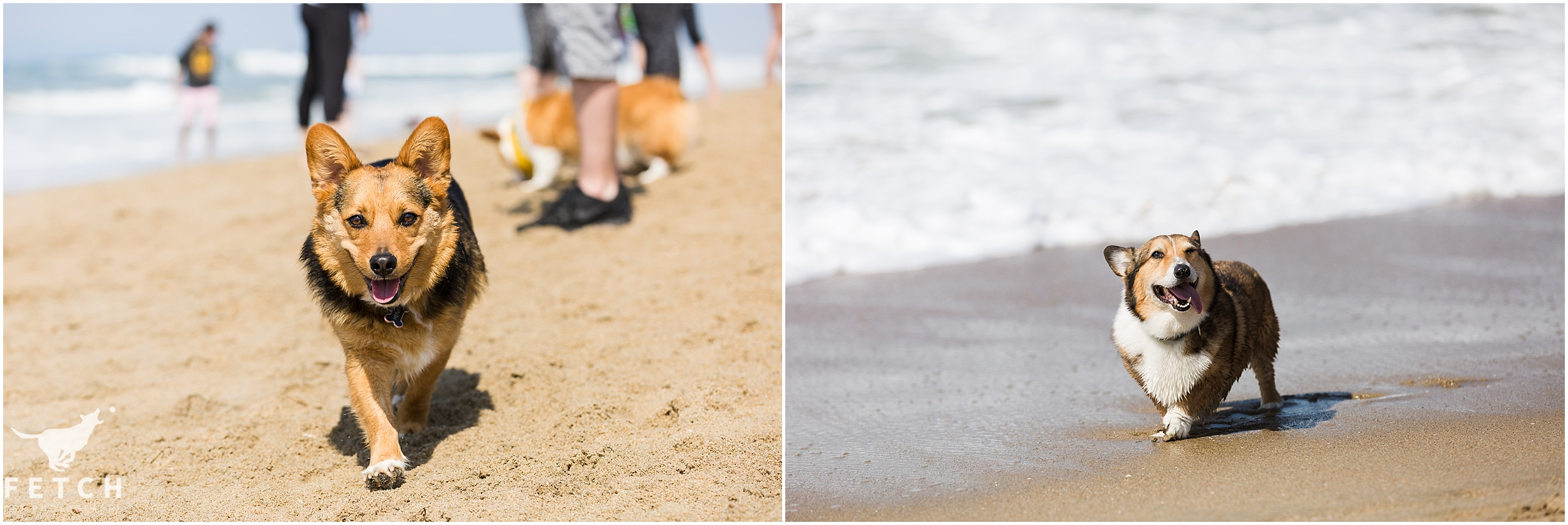 dog-beach-photos