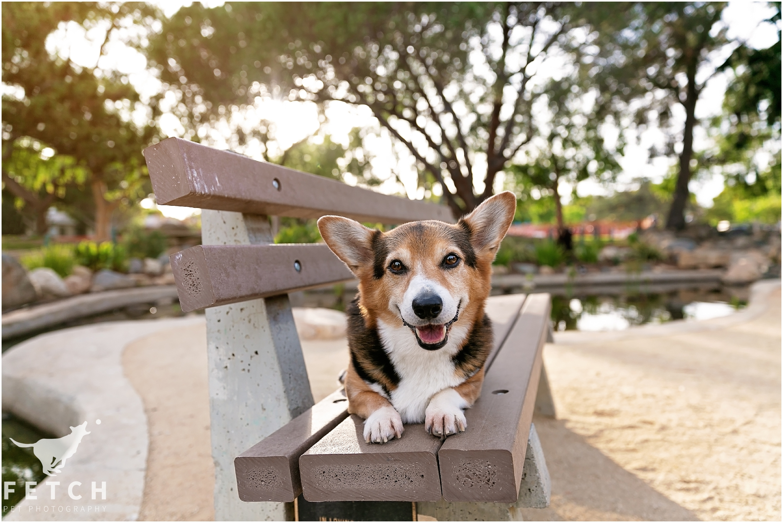 los-angeles-dog-photography