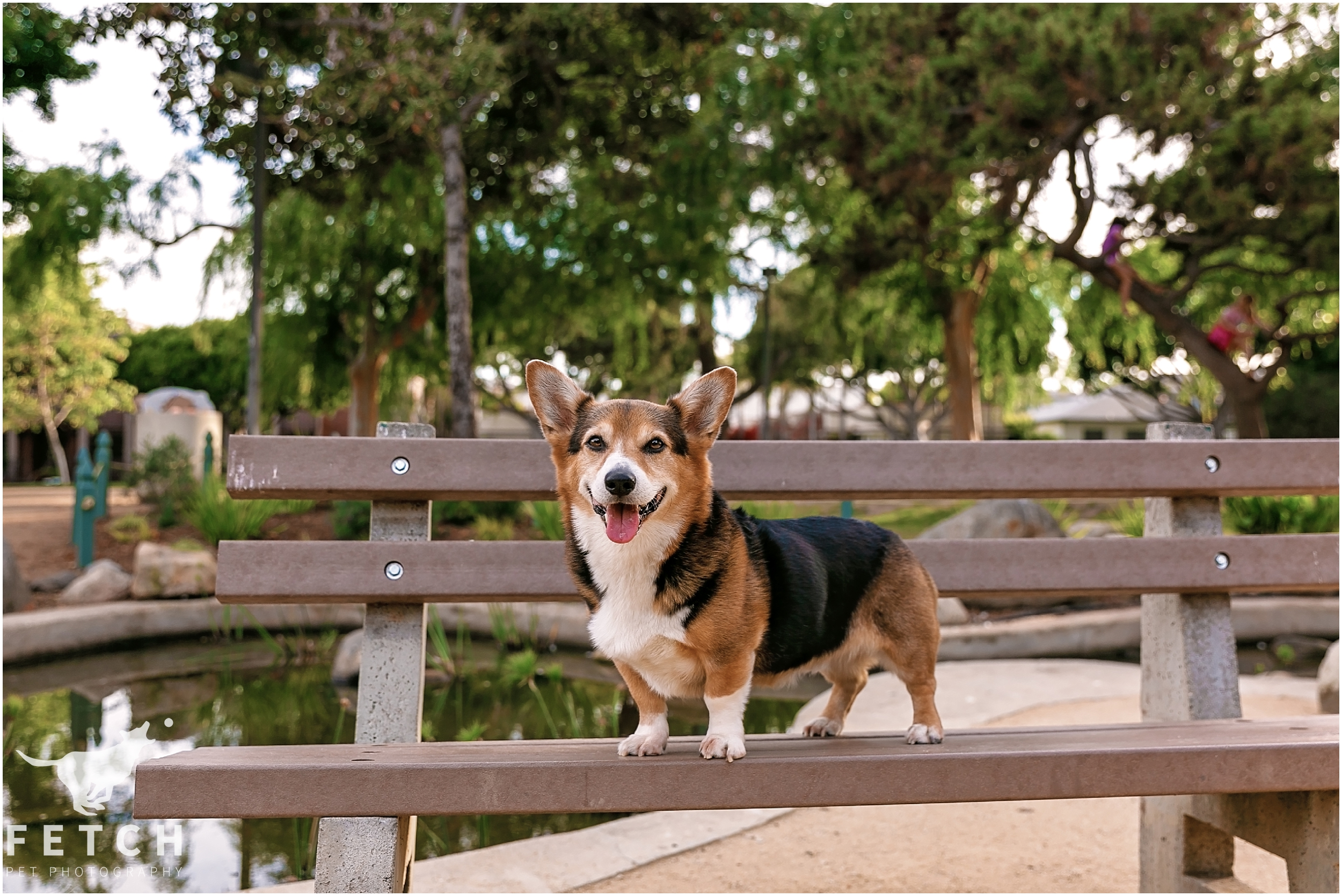 los-angeles-park-dog-photos