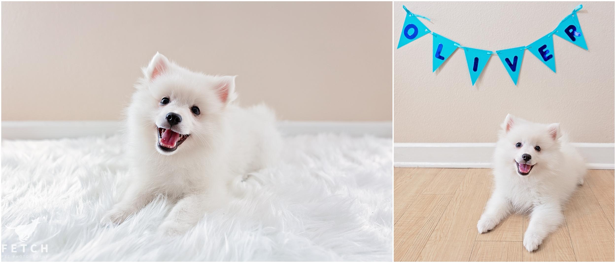 puppy-announcement