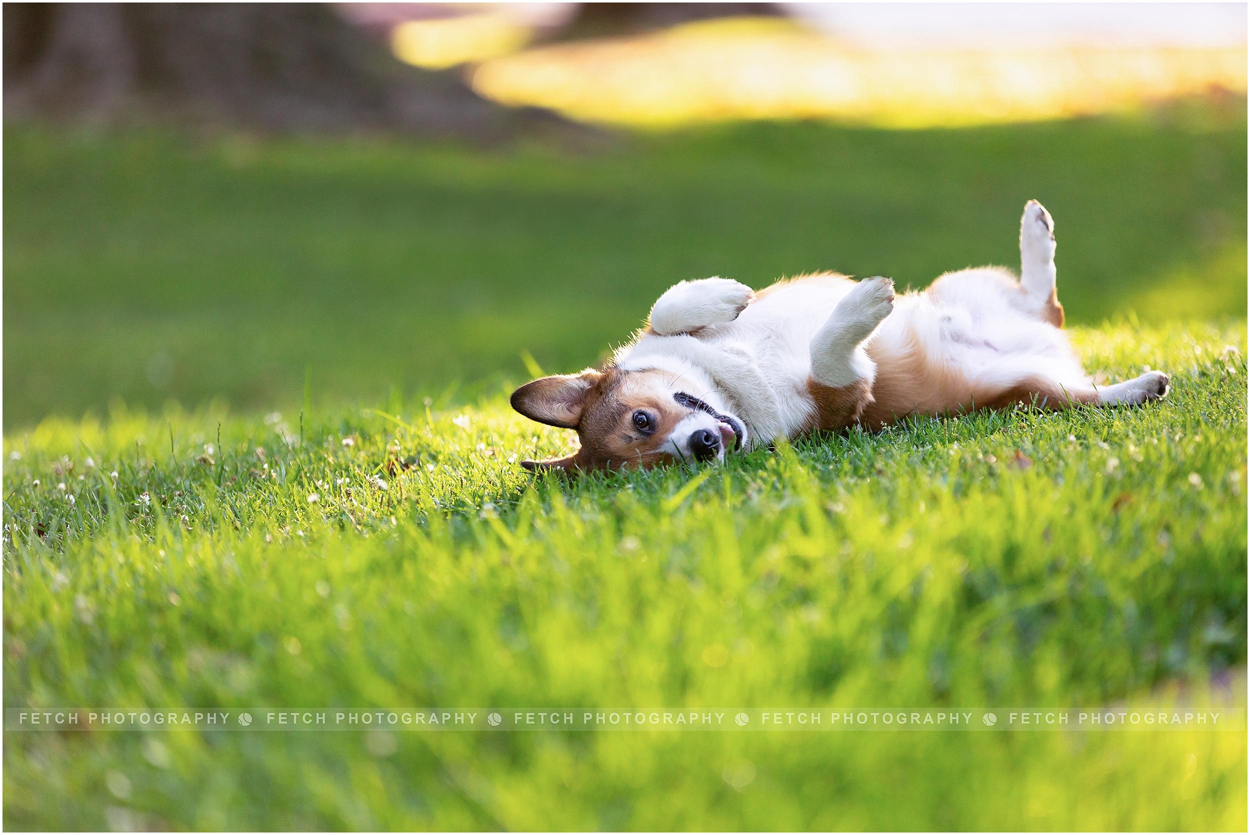 puppy-photos