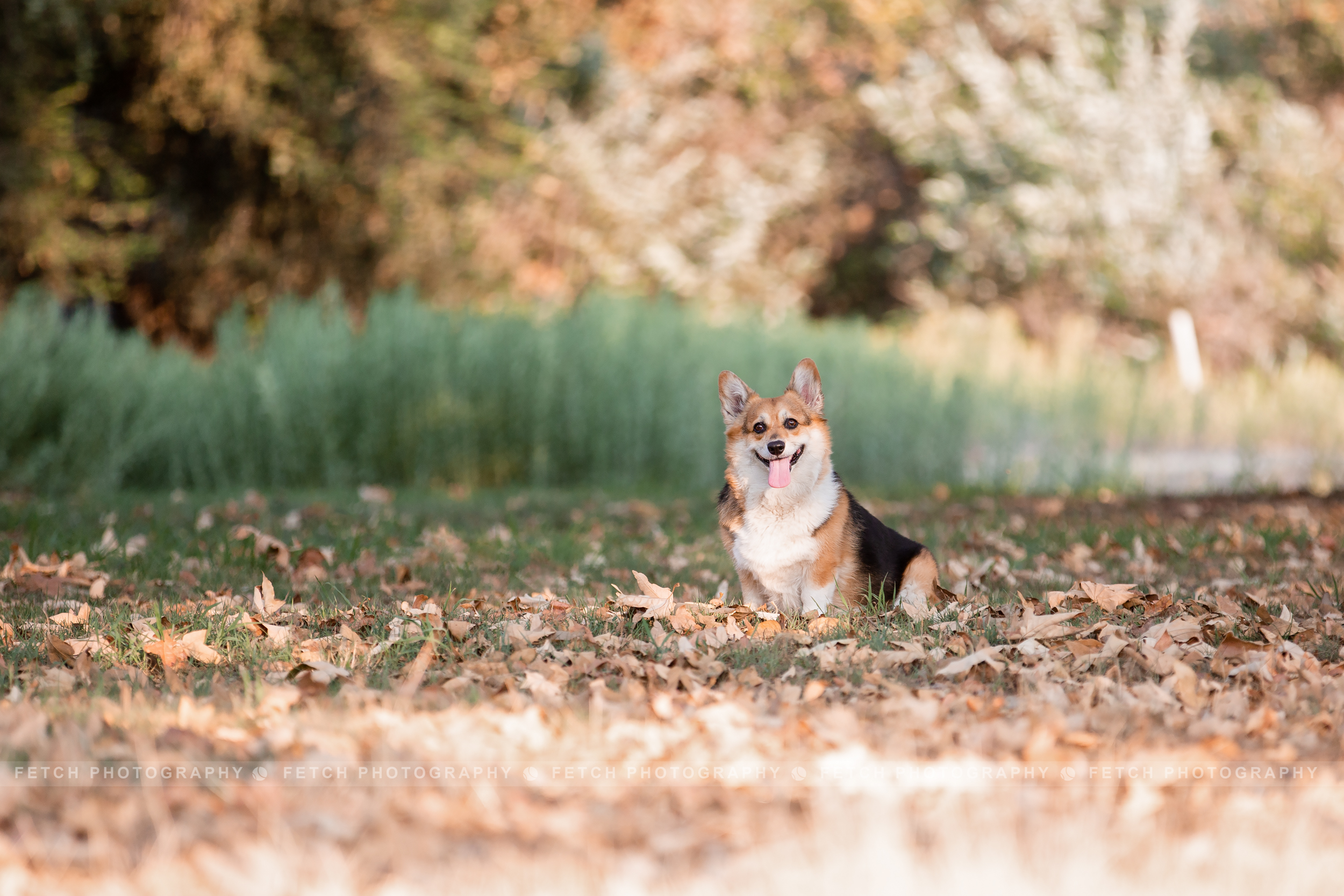 los-angeles-corgi-photographer