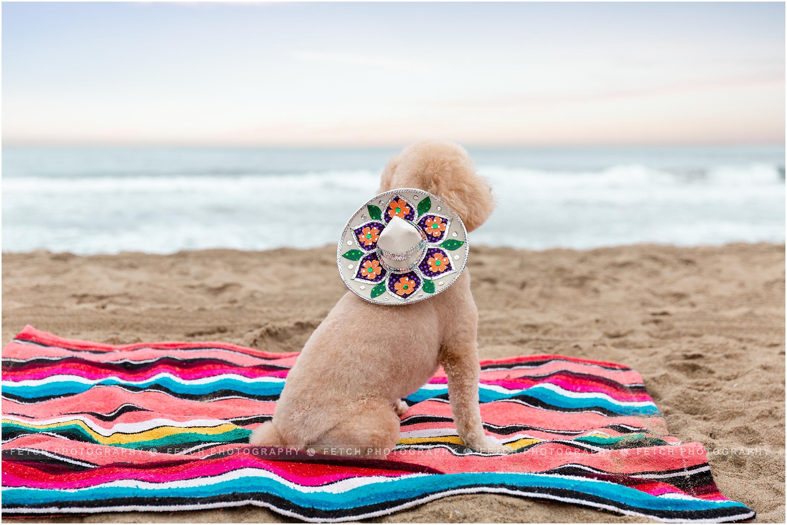 dog-fiesta