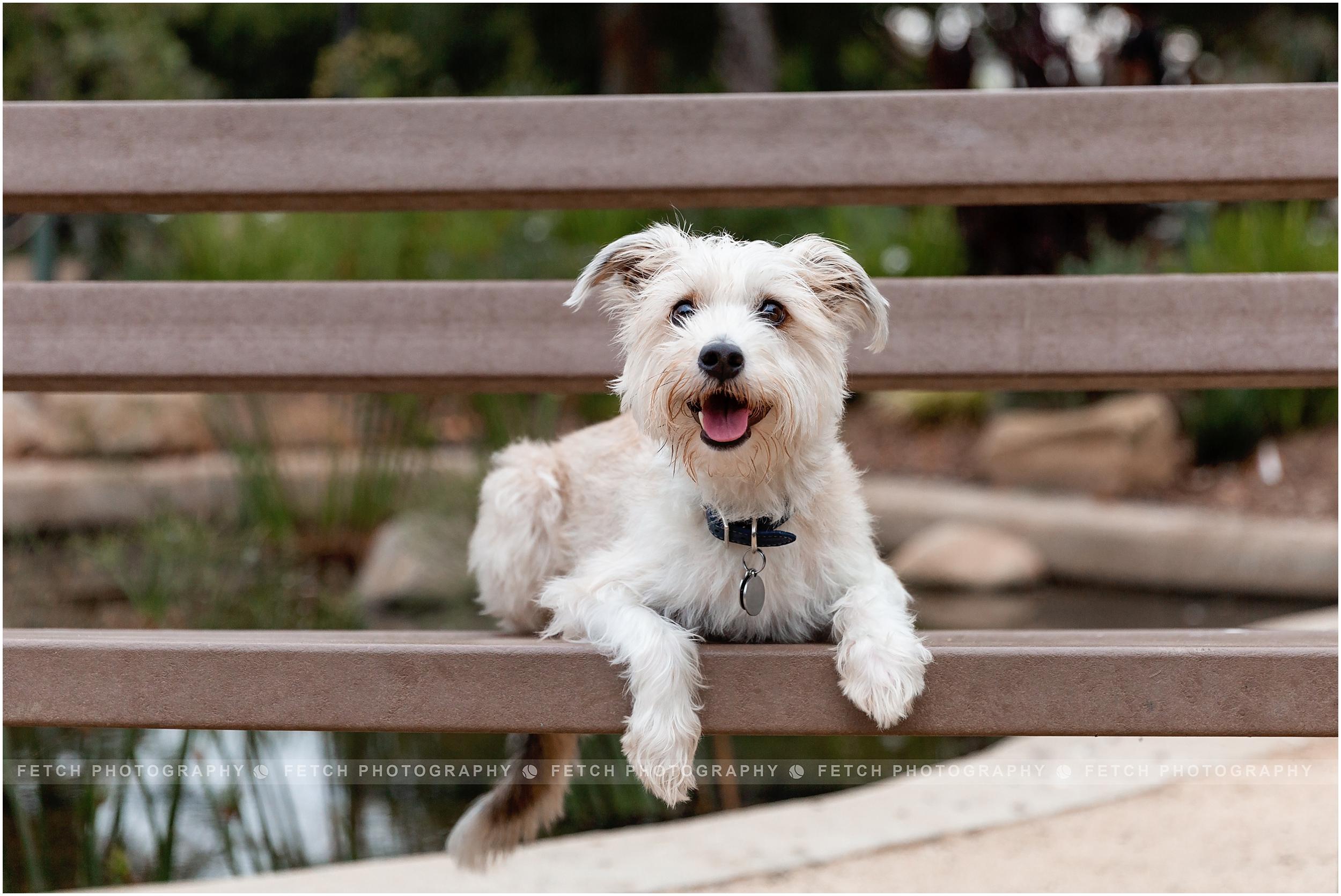 terrier-photos