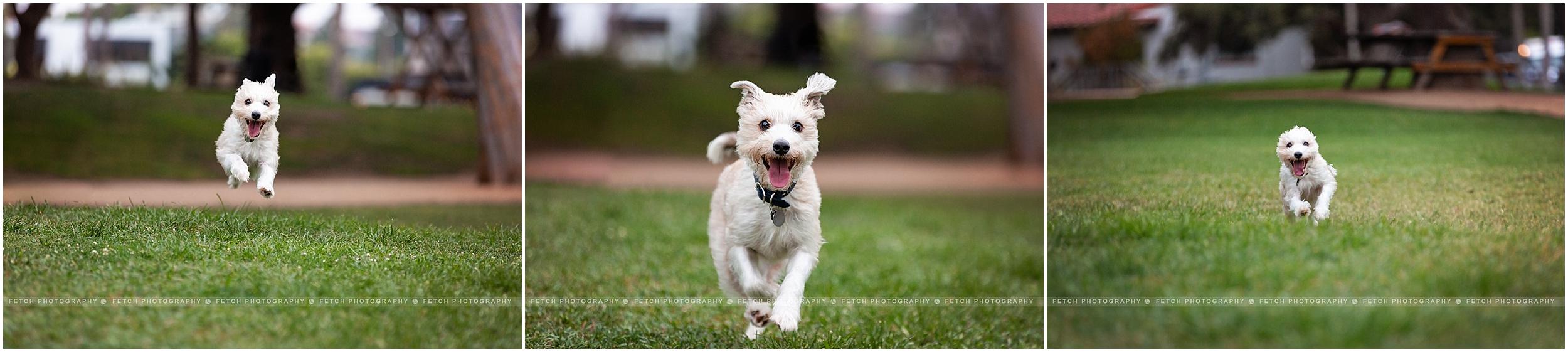 action-dog-photos