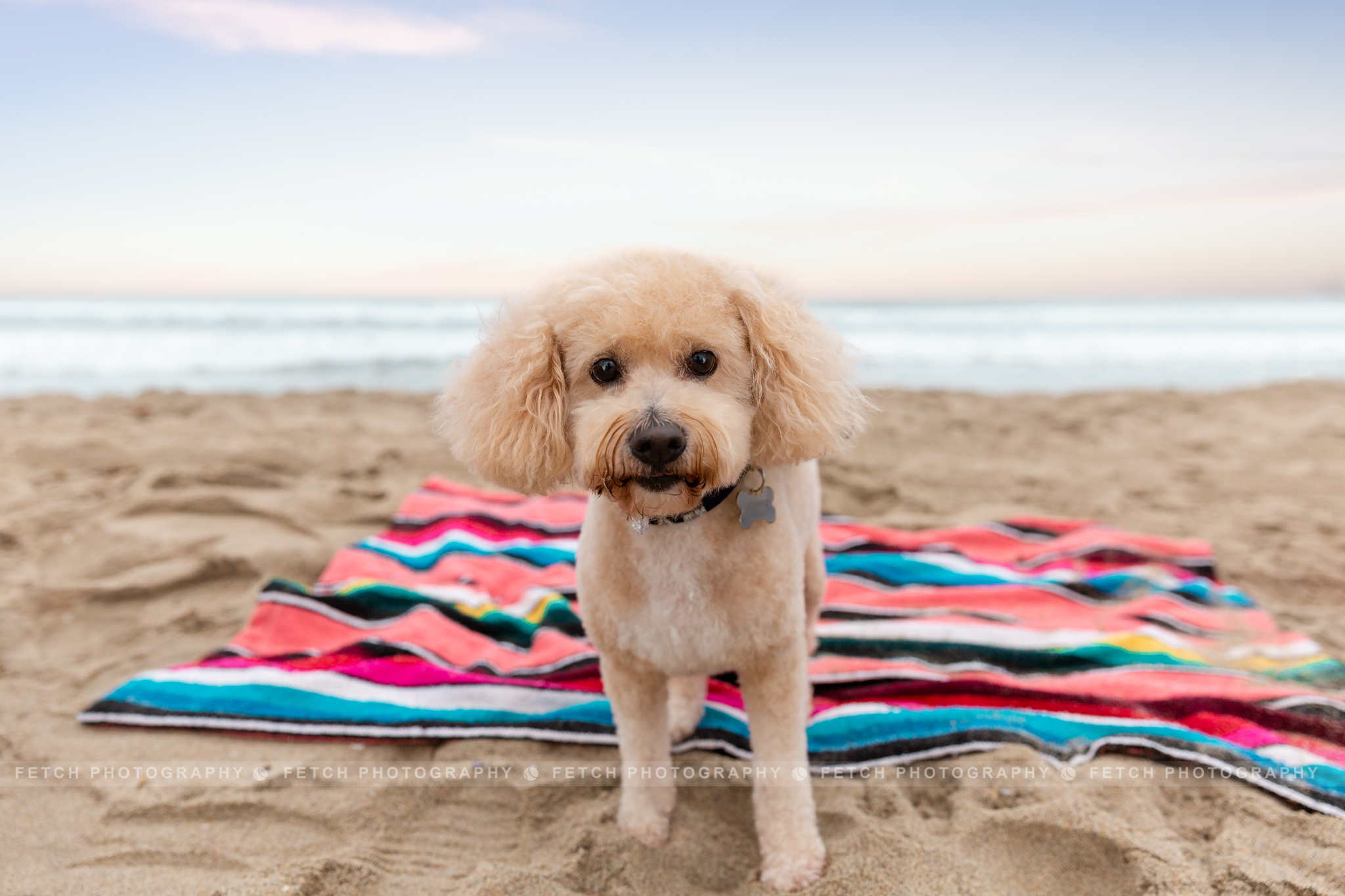 los-angeles-dog-beach-photographer