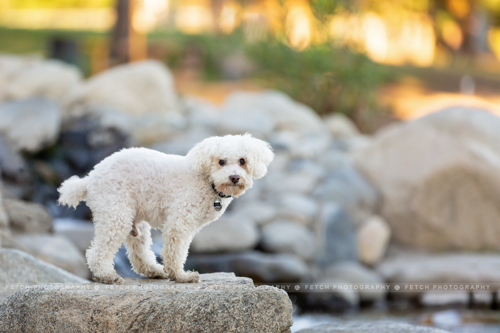 los-angeles-rescue-dog-photographer