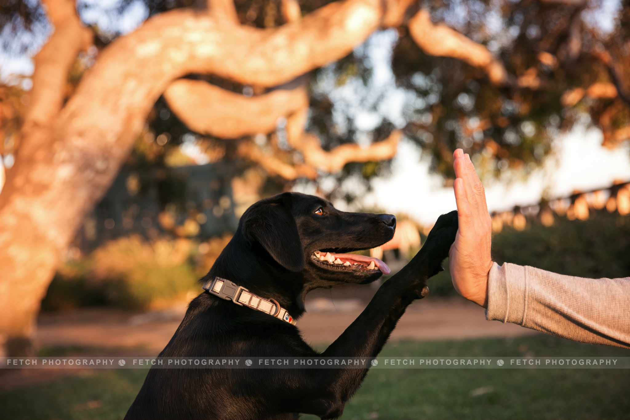 los-angeles-pet-photography