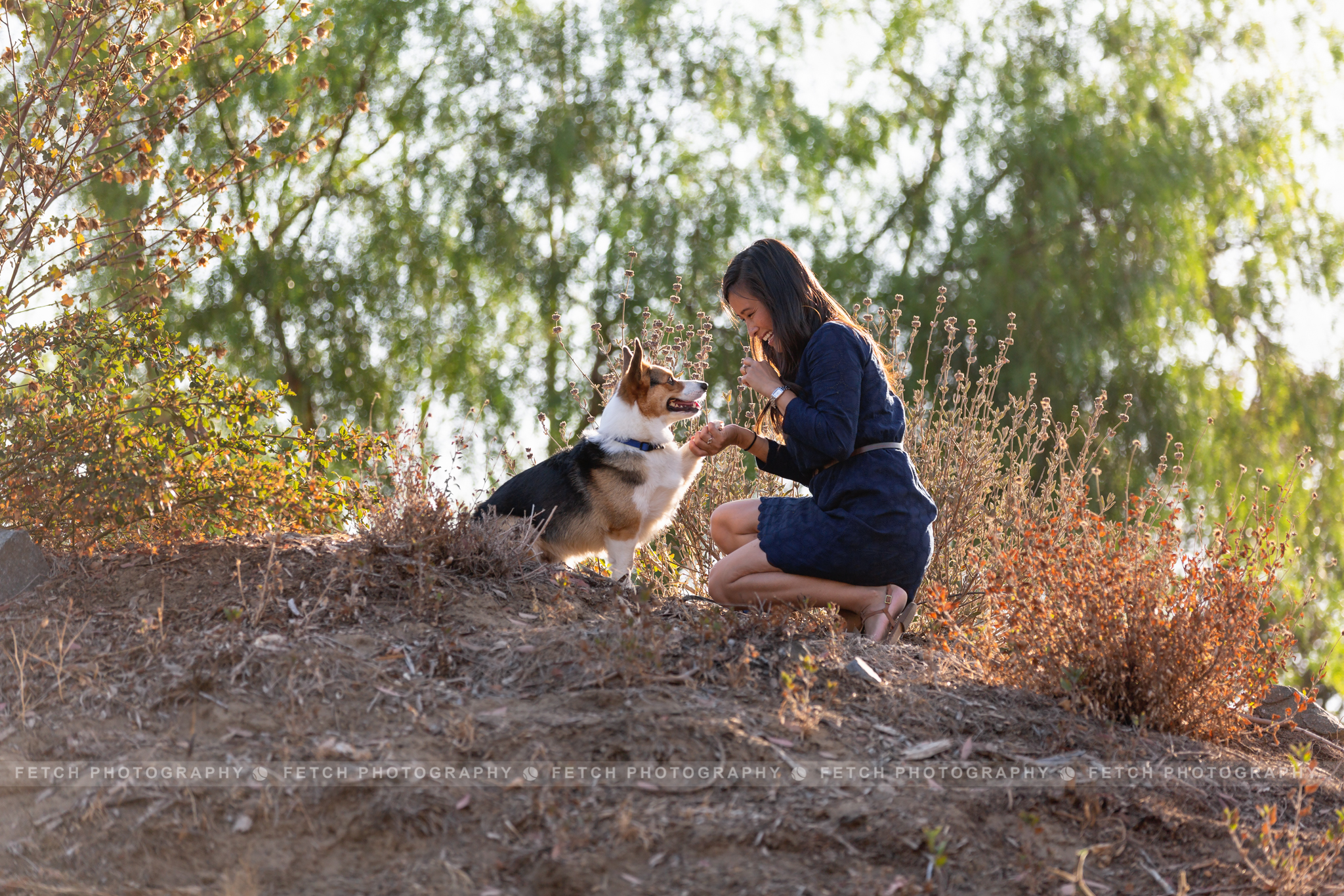 los-angeles-corgi-photography