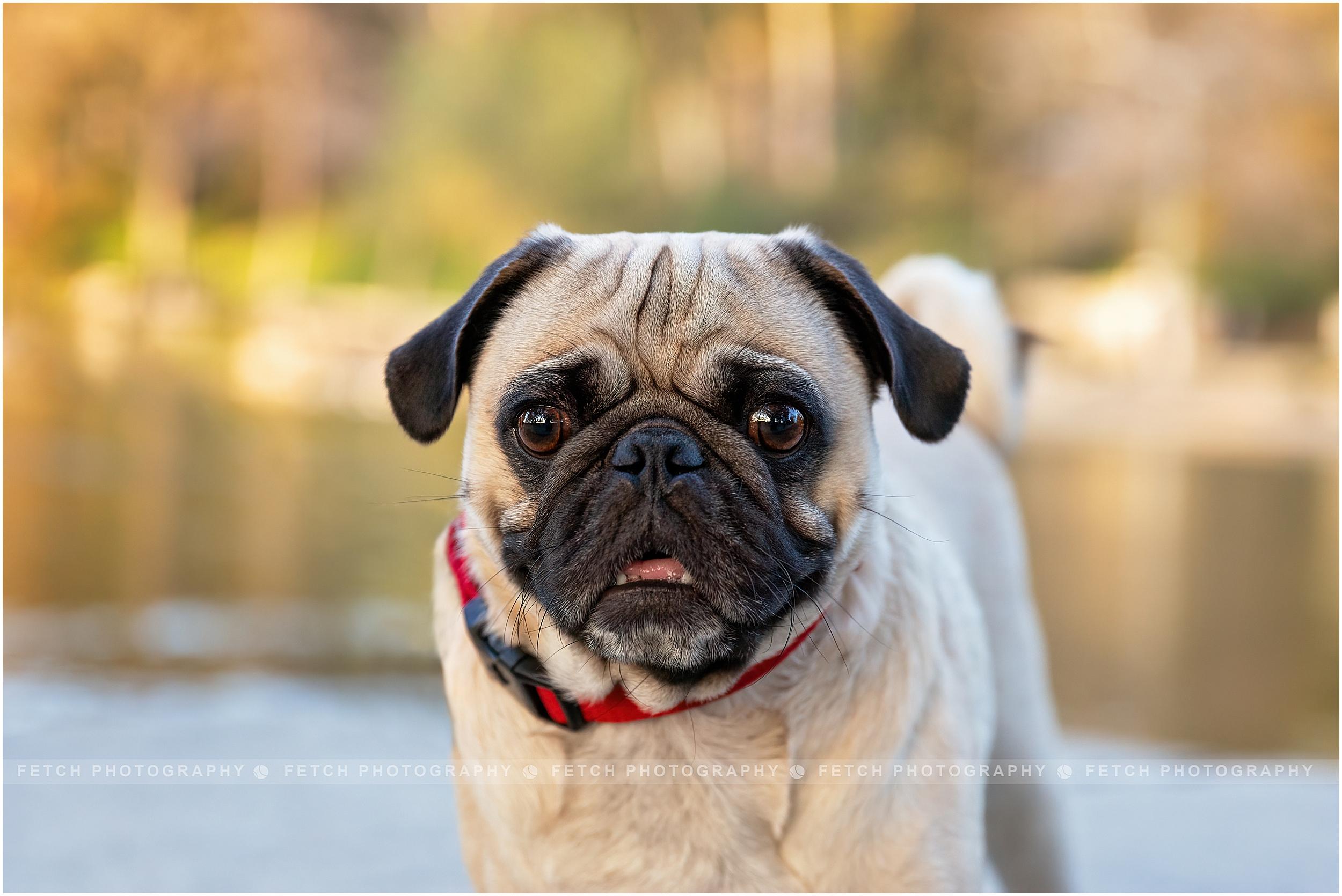 los-angeles-dog-portrait