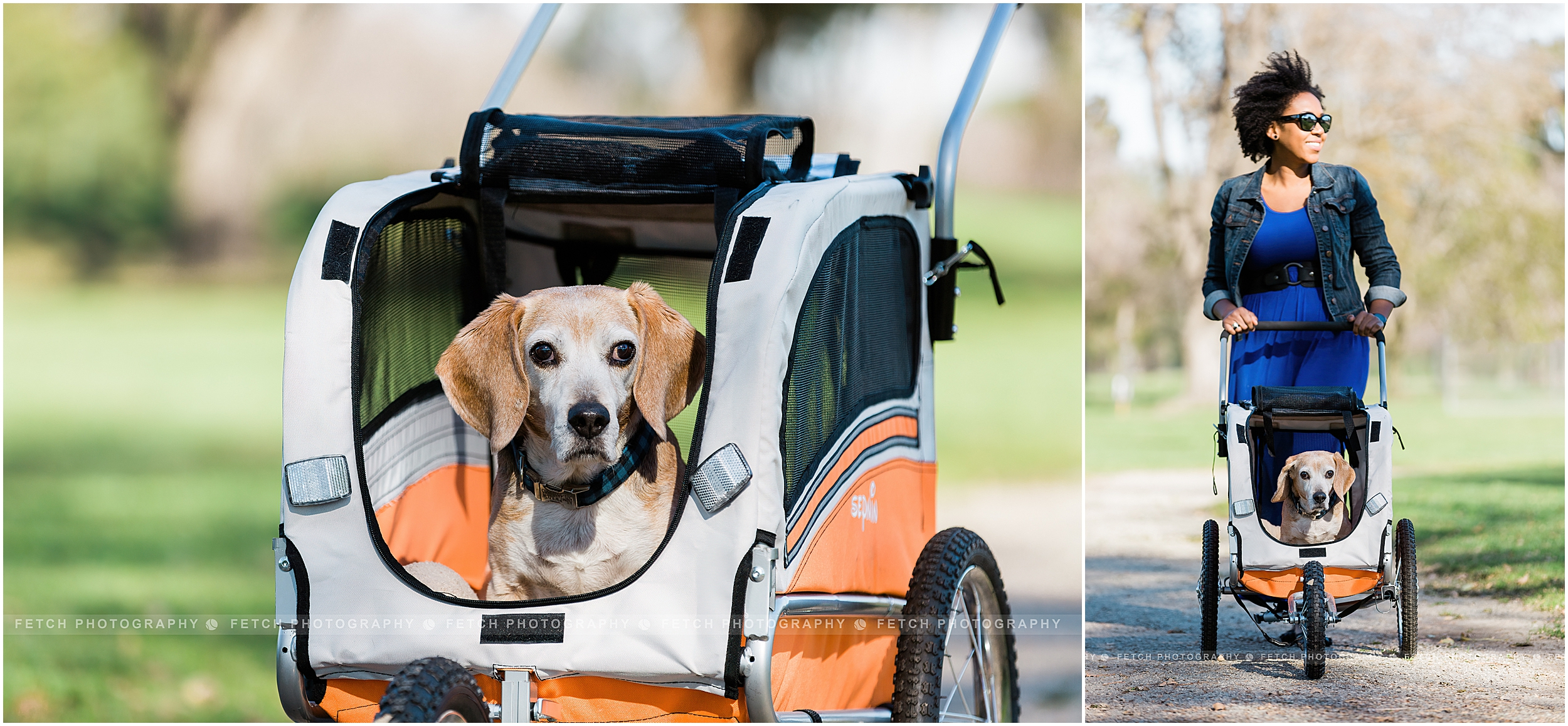 pet-product-photography