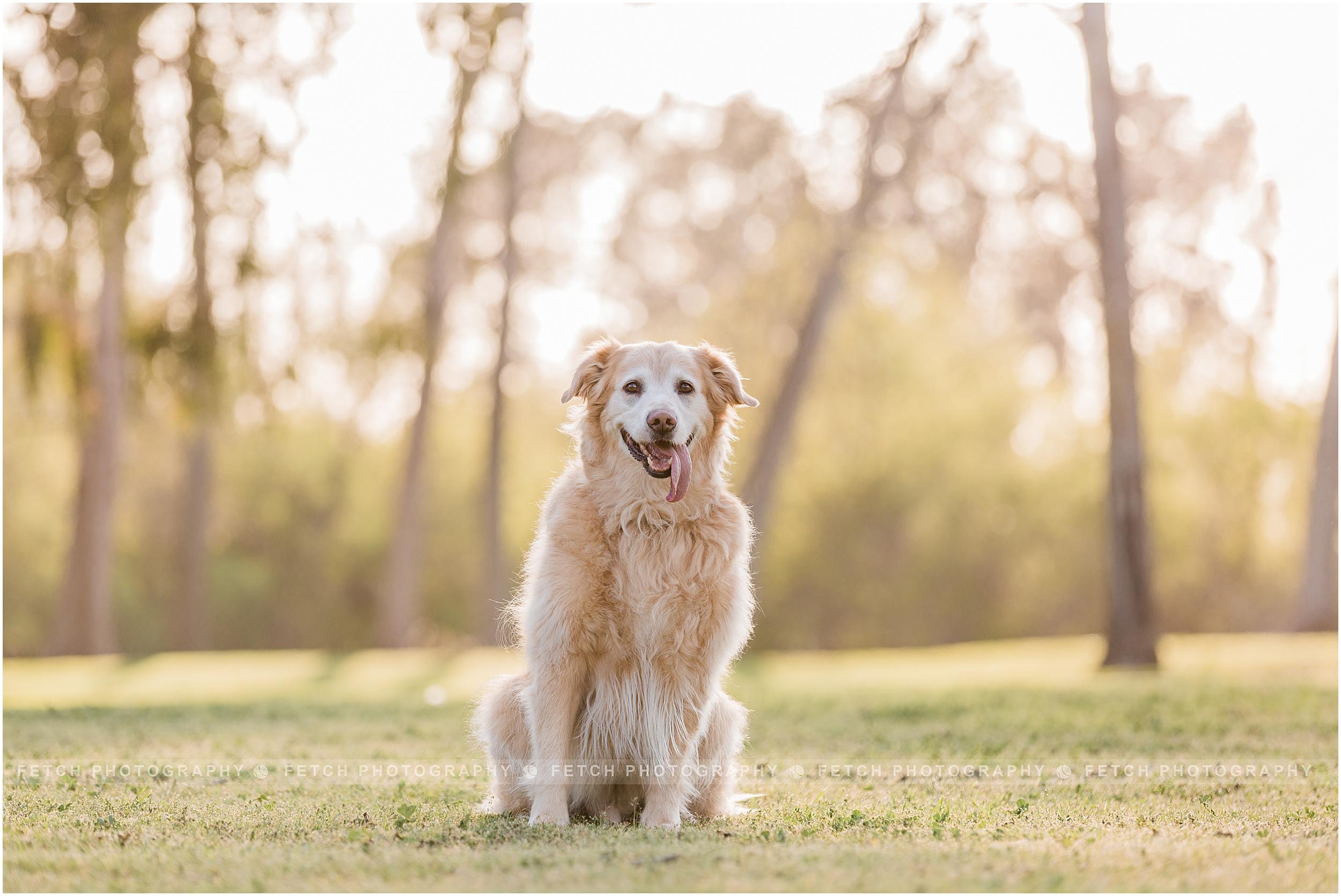 pet-portrait-photographer