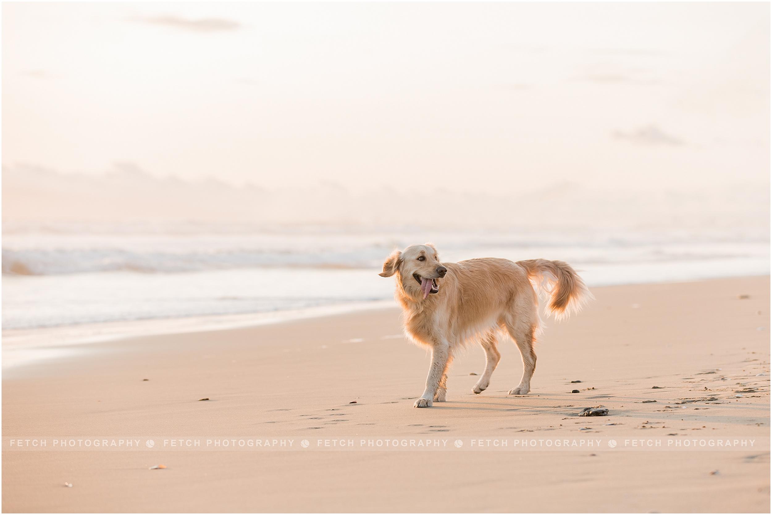 dog-beach-photographer
