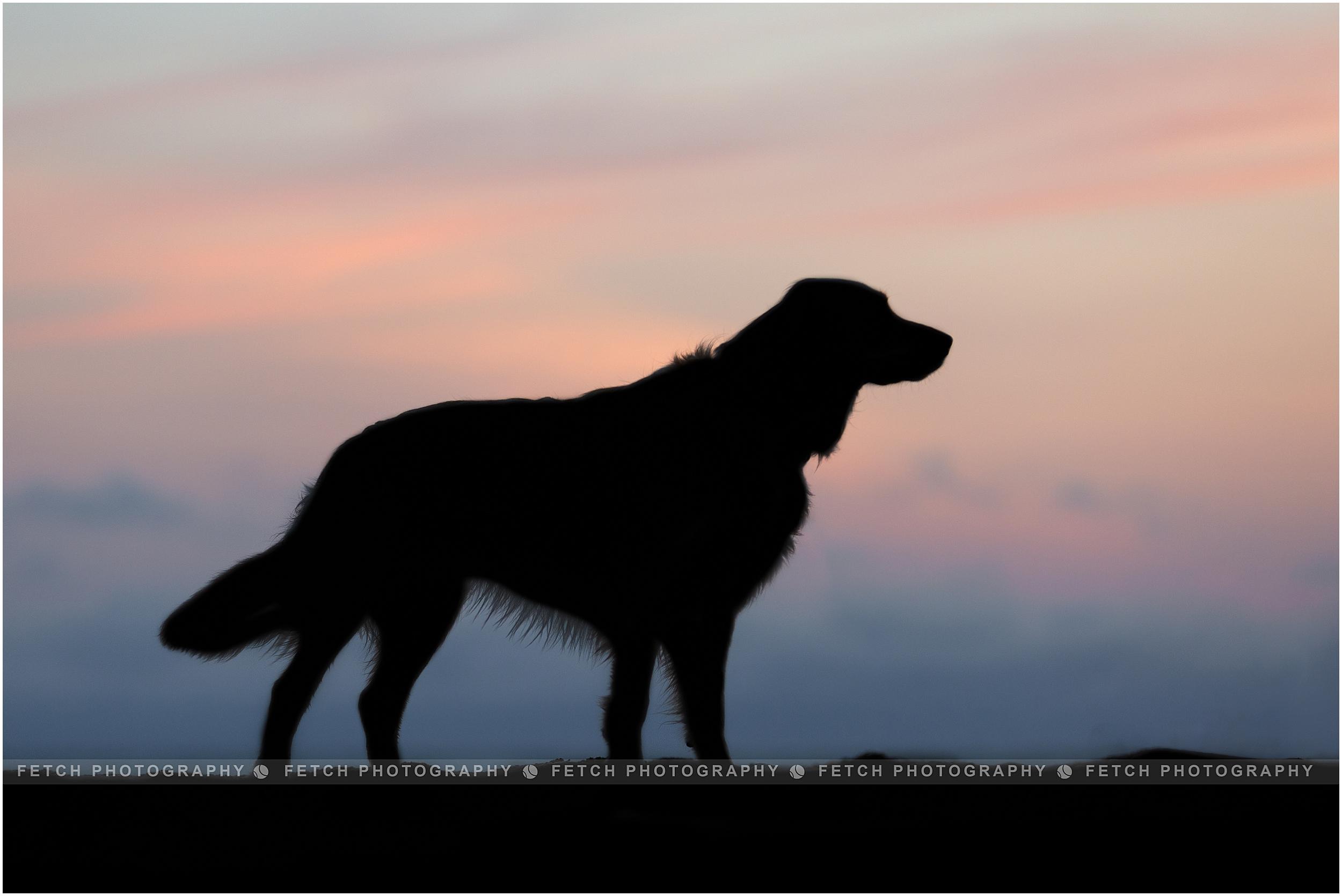 beach-dog-silhouette