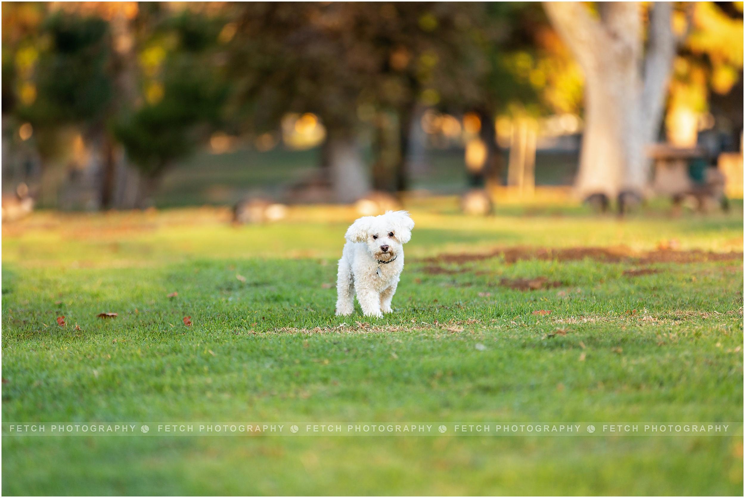 rescue-dog-photographer