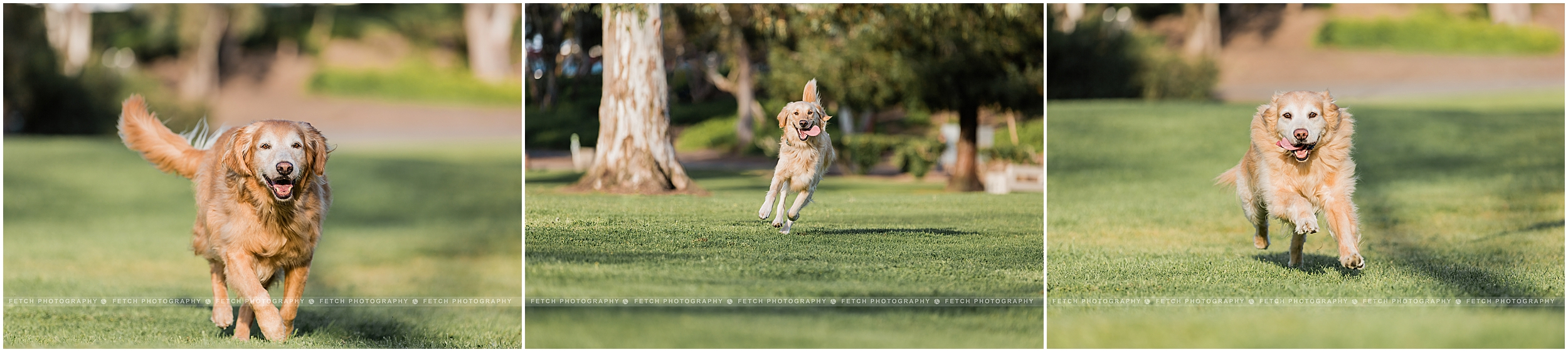 action-dog-photography