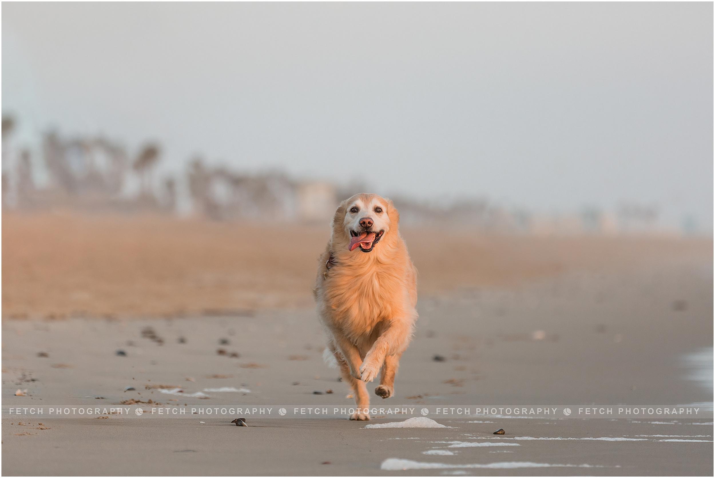 huntington-dog-beach