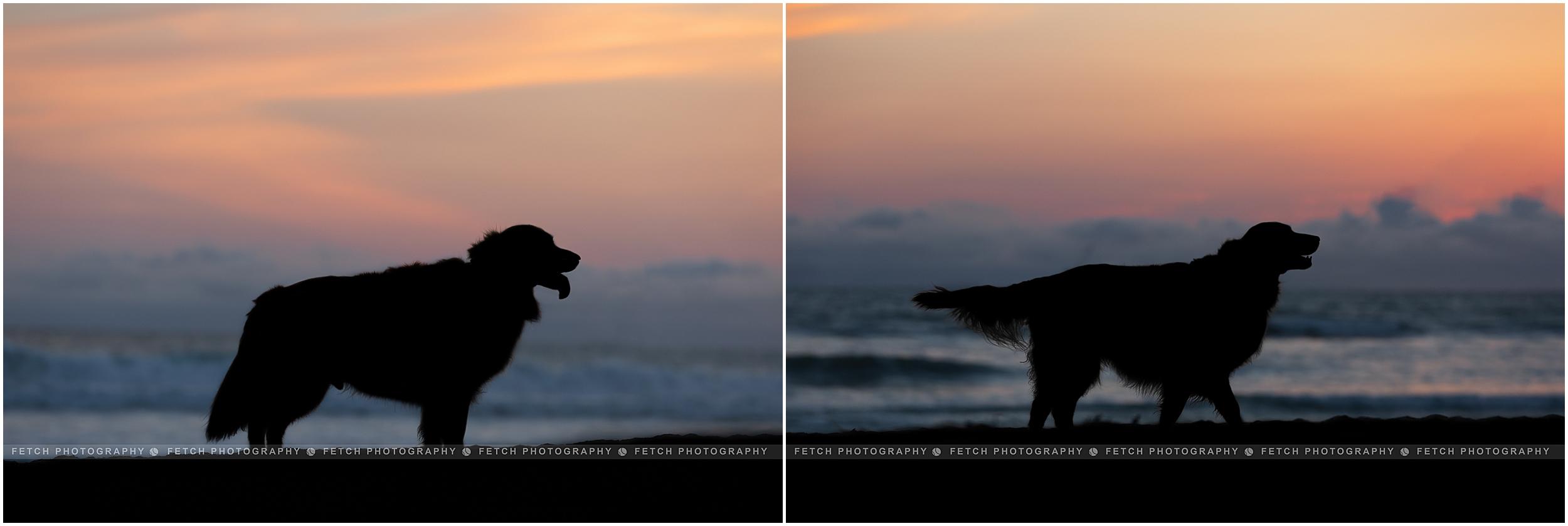 golden-retriever-silhouette