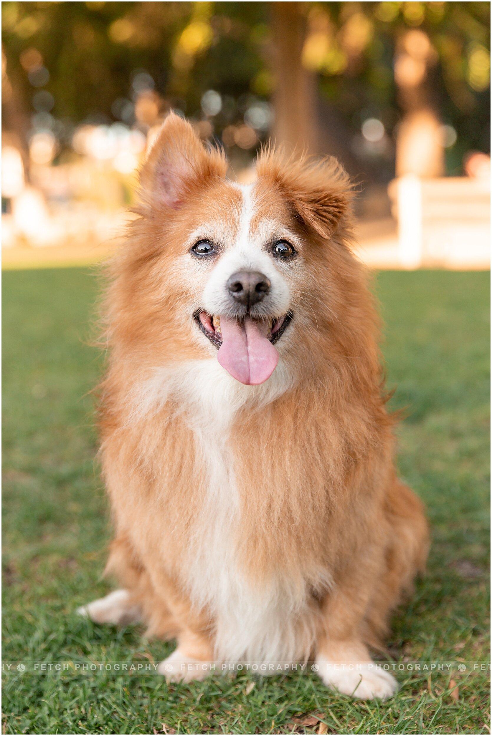 dog-portrait-photography