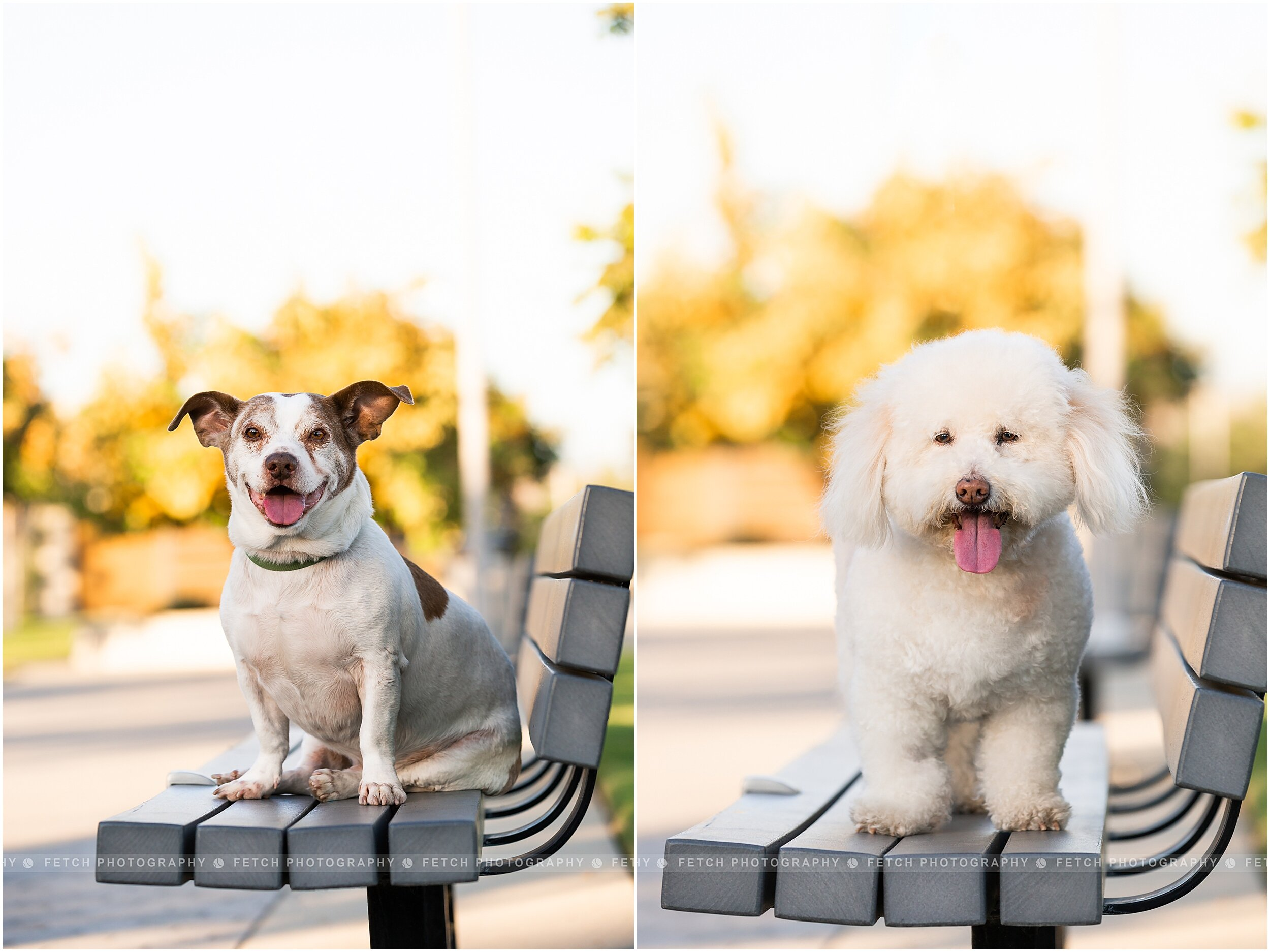 los-angeles-dog-portraits