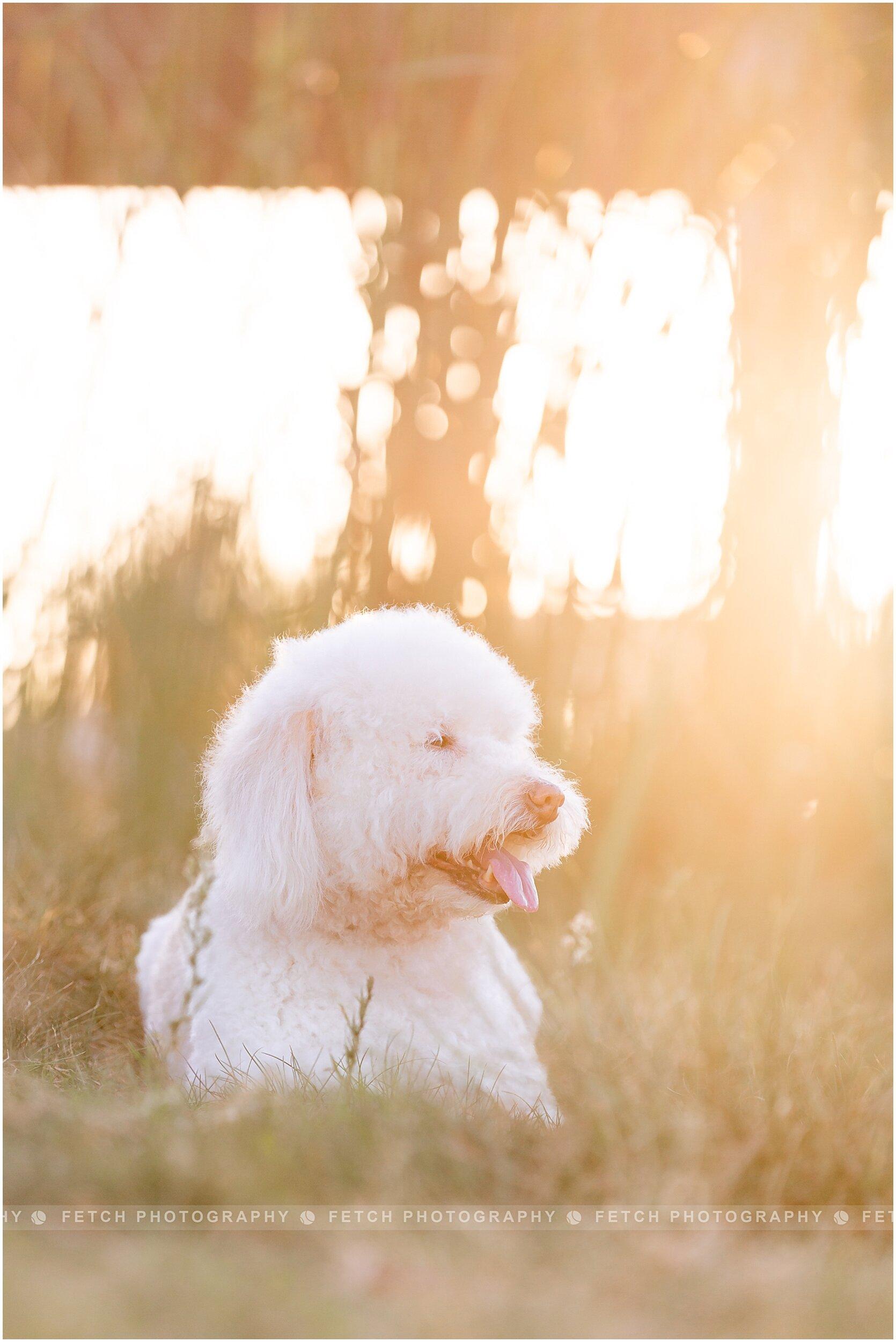 dog-portrait-photographer
