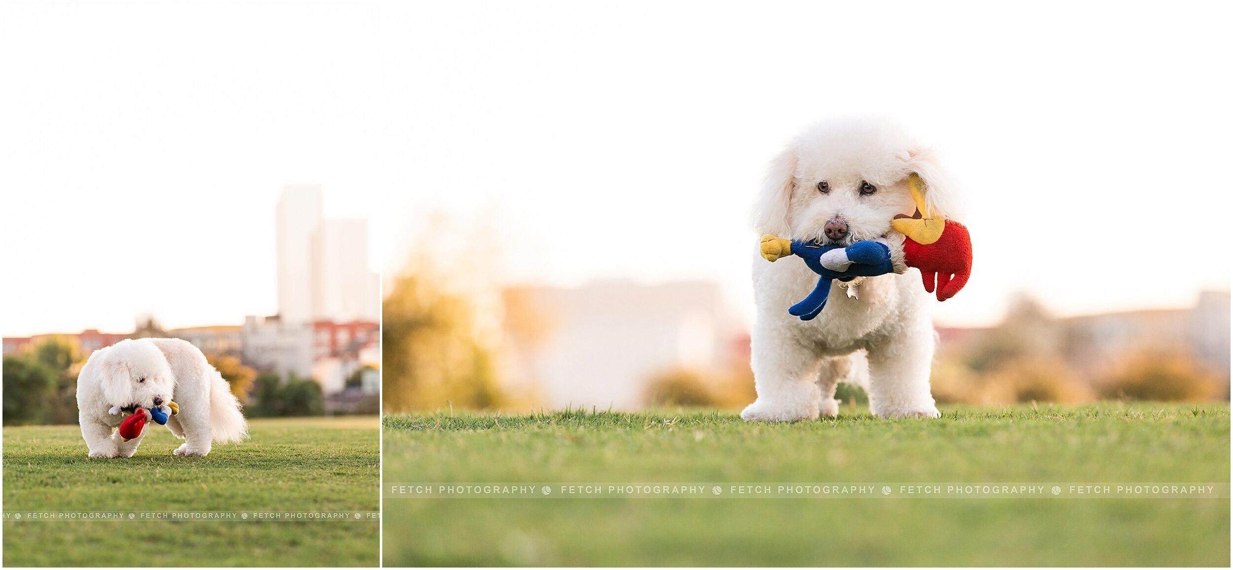 pet-photographer