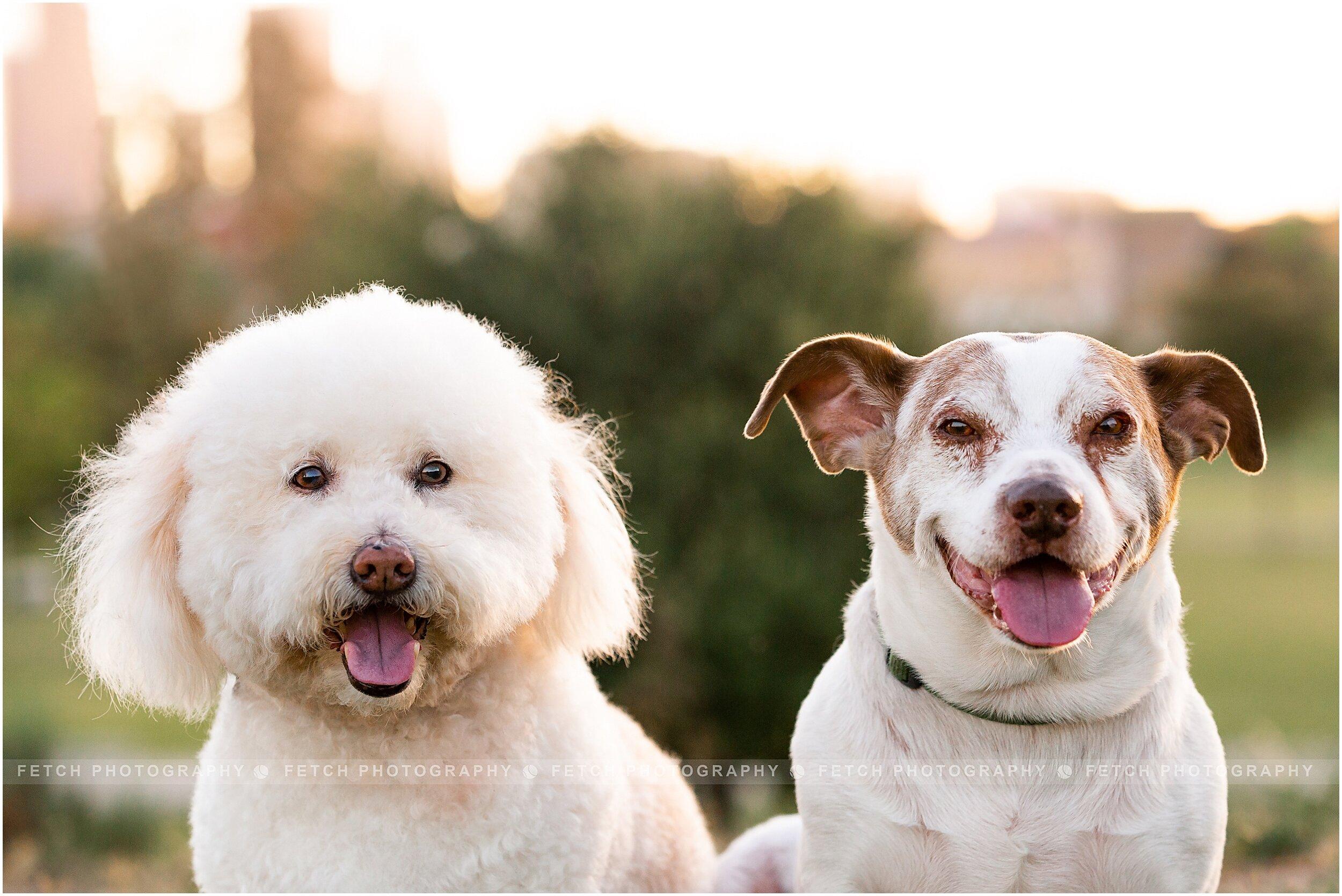 pet-portraits