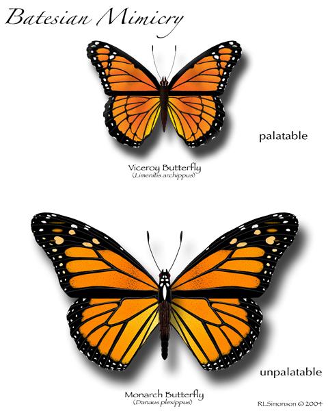Batesian Mimicry.jpg