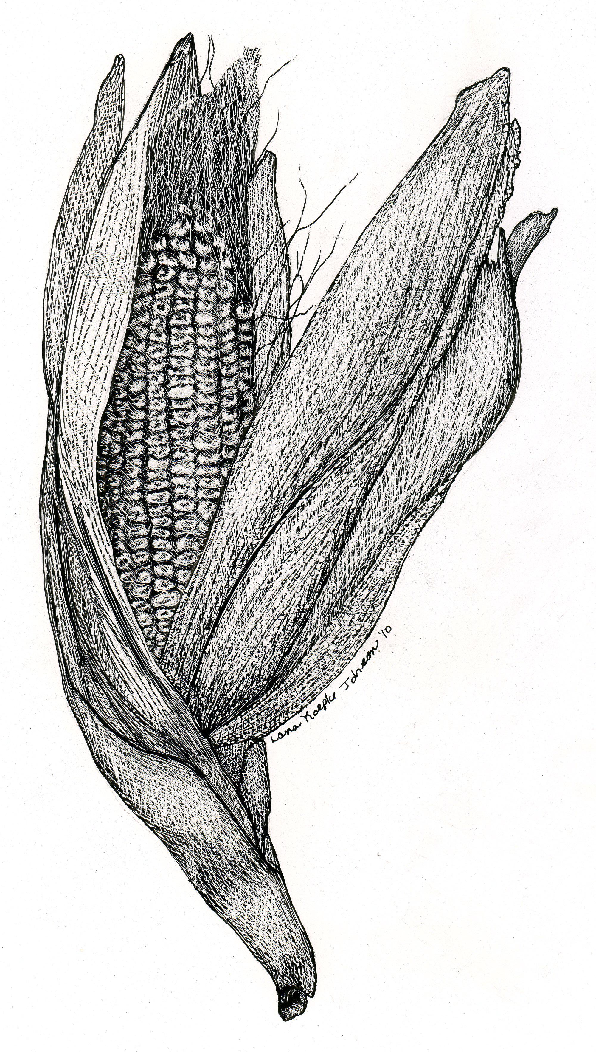 Lana Field Corn - scratchboard - Lana koepke Johnson.jpg