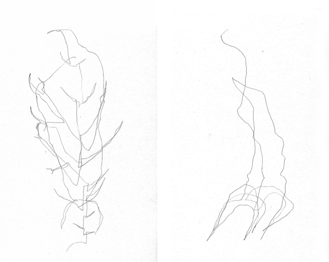 Two blind contour drawings of the same leaf. Left drawing frontal view, right drawing one quarter turn. Both by the author.