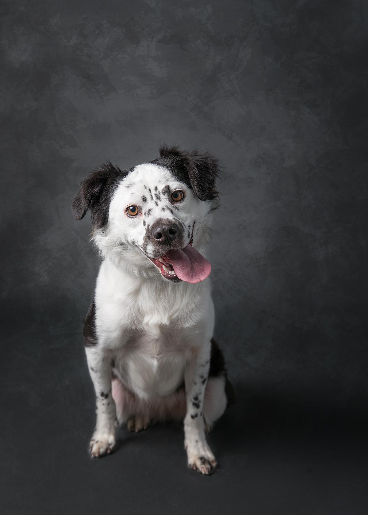 black and white dog fine art studio portrait