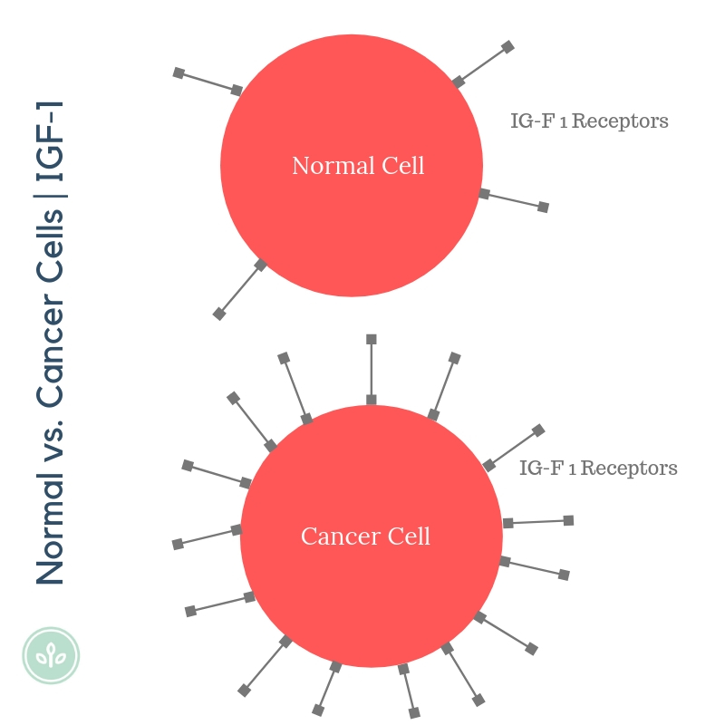 A simple diagram demonstrating the difference in IGF-1 receptors on normal vs. cancer cell.