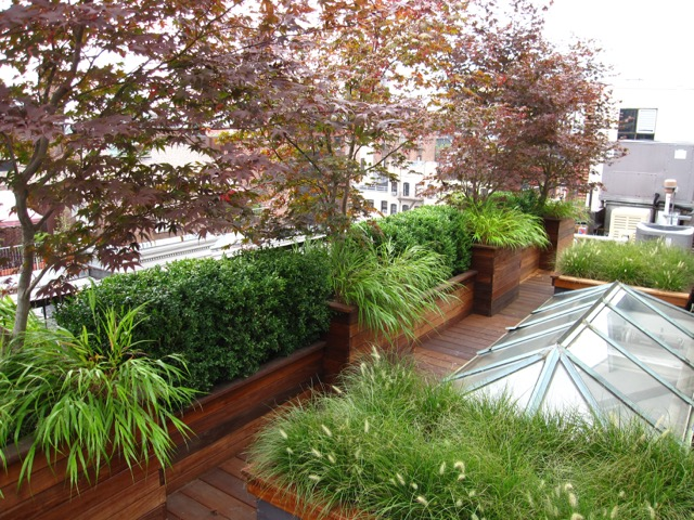 Ipe Planters and Japanes Maples.jpeg