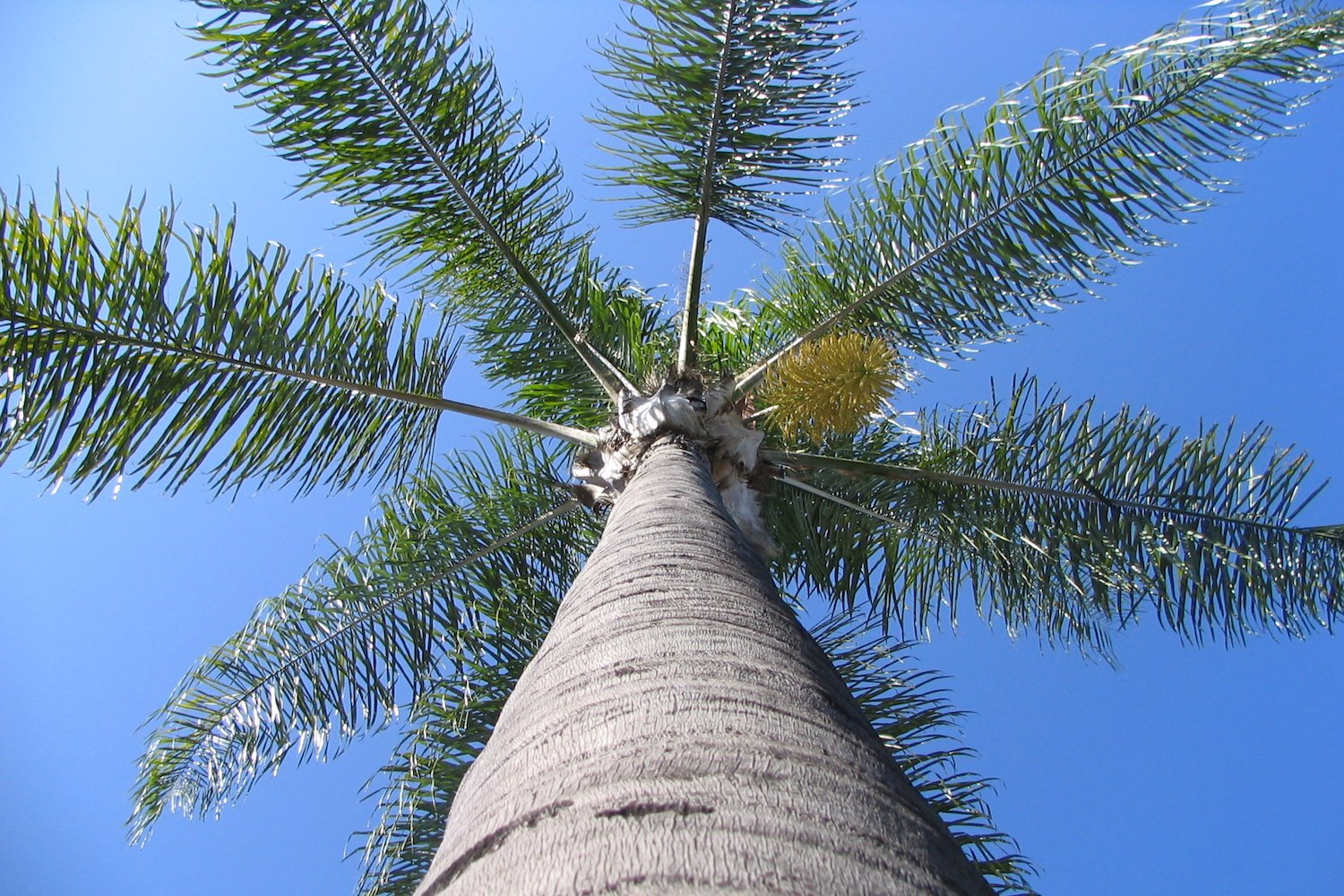 california_palm_tree_photo.jpg