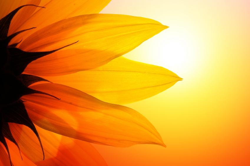 Sun-and-Sunflower.jpg