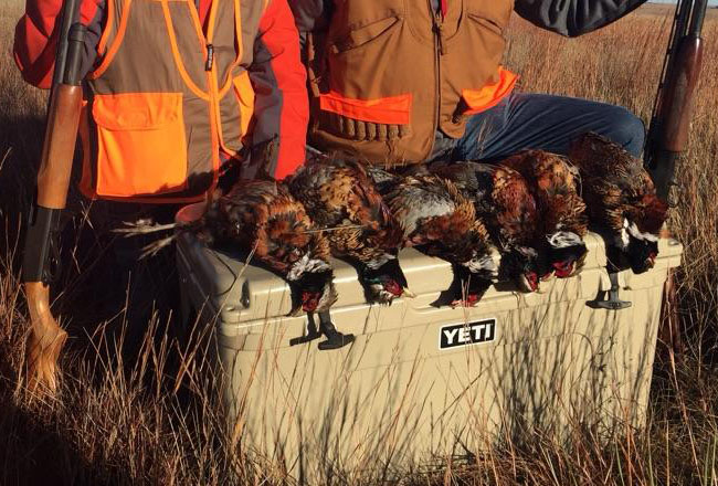 Pheasant Harvest 1.jpg