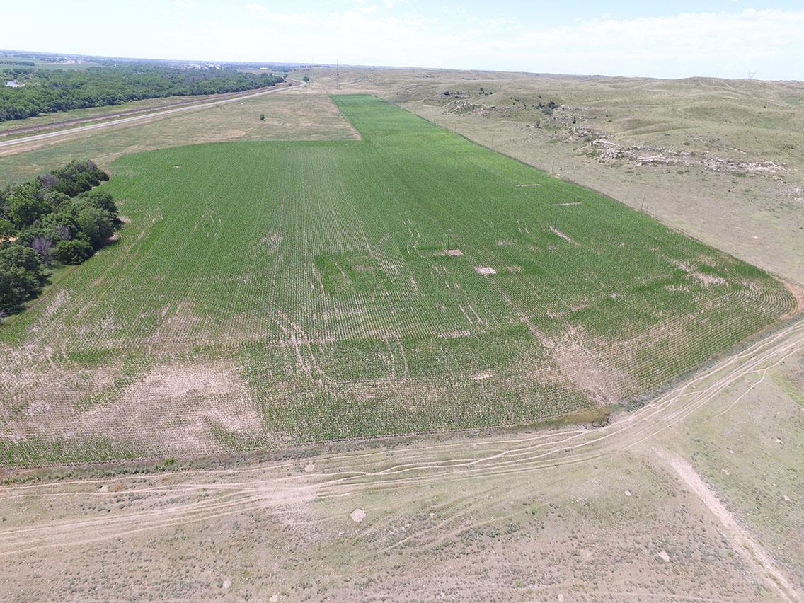 roscoe west field.jpg