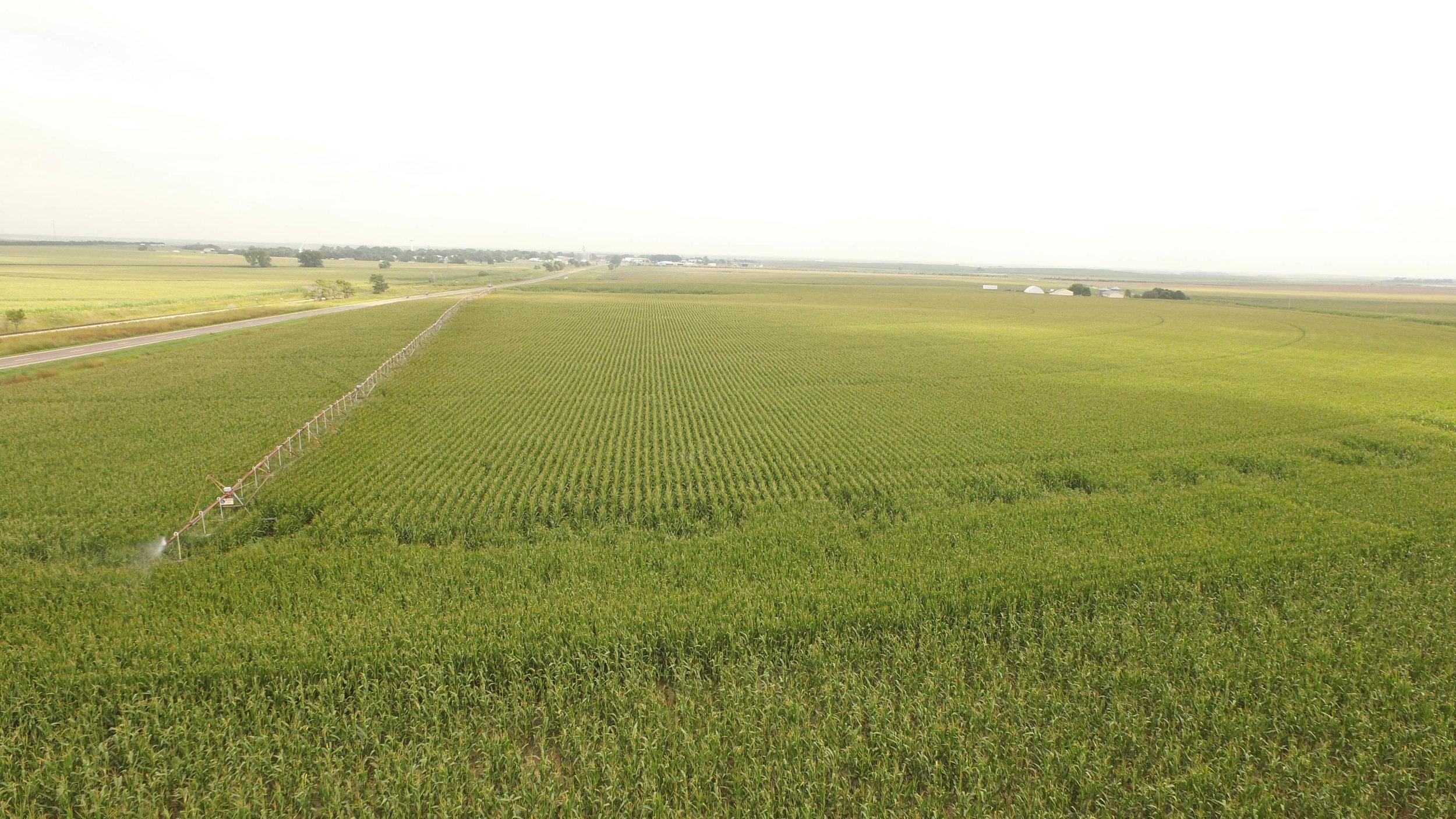T Irrigated 8.19 (5).jpg