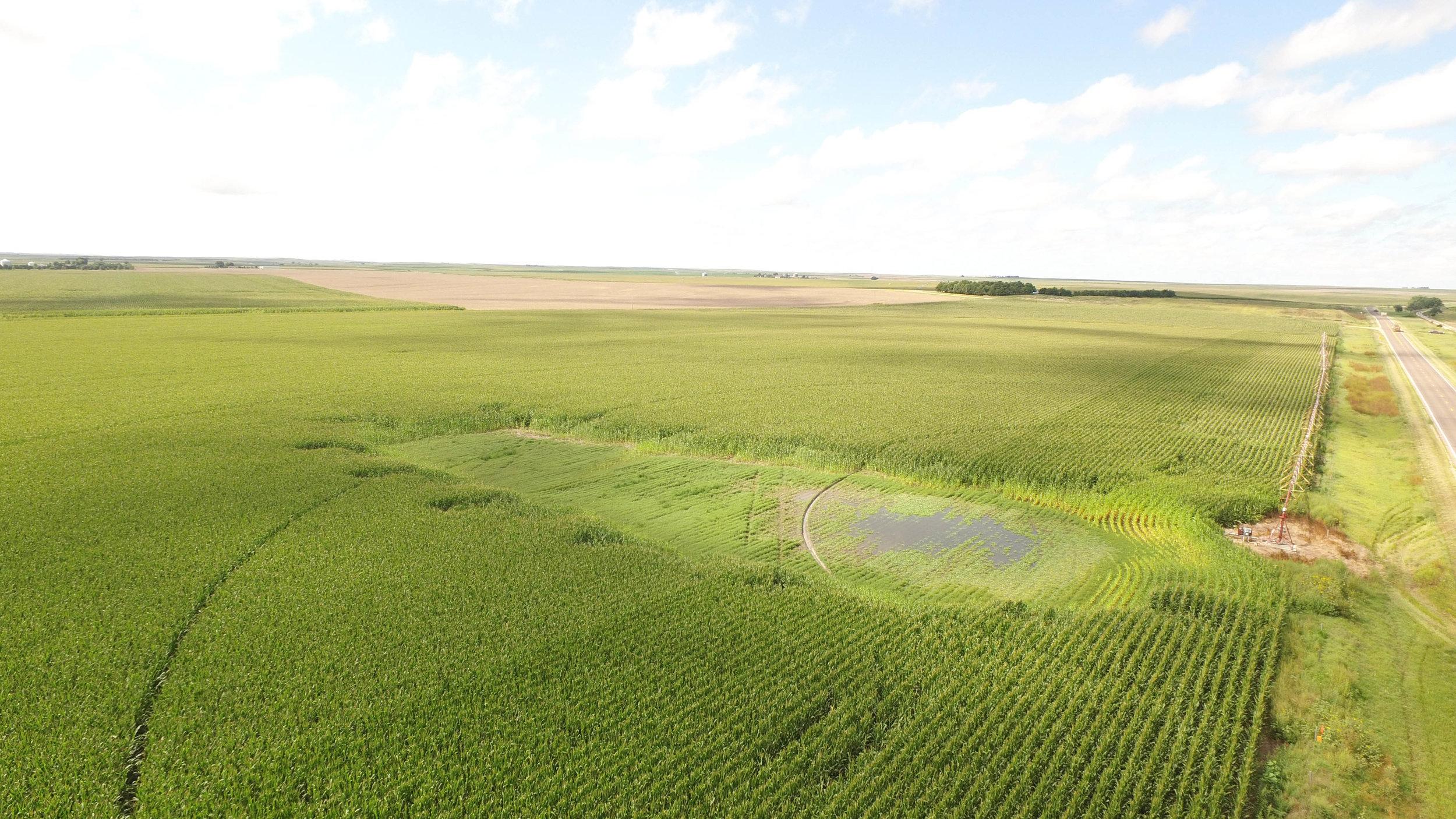 T irrigated 8.21 (3).jpg