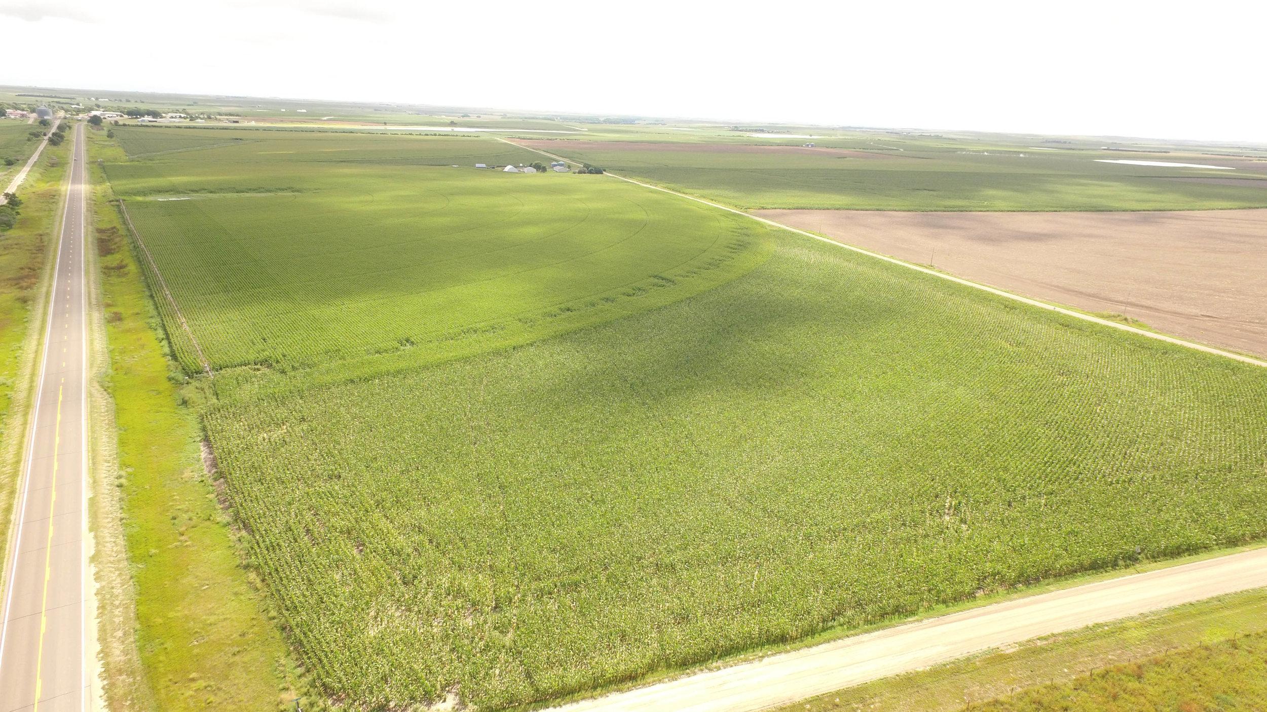 T irrigated 8.21 (1).jpg