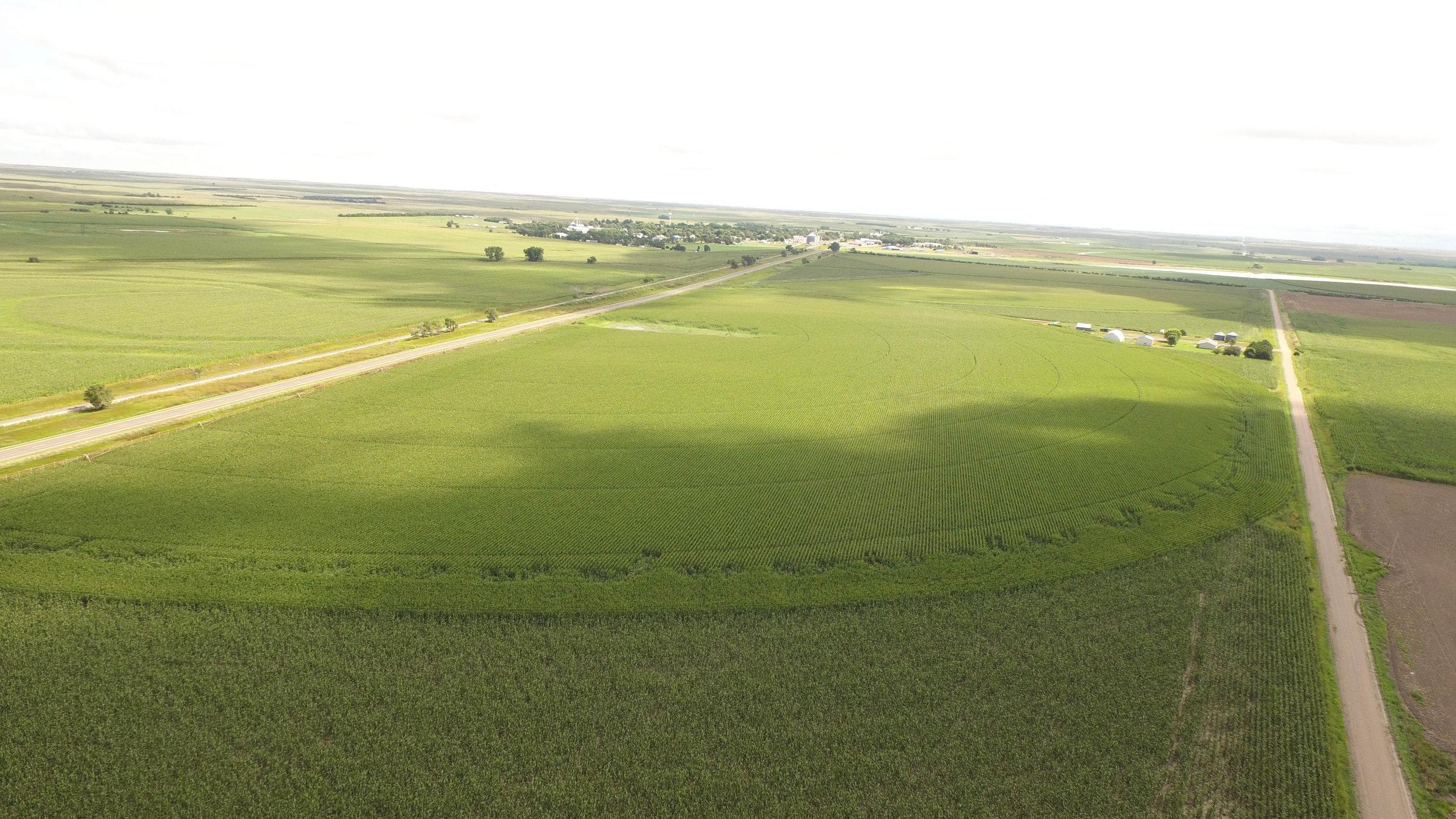T irrigated 8.21 (4).jpg