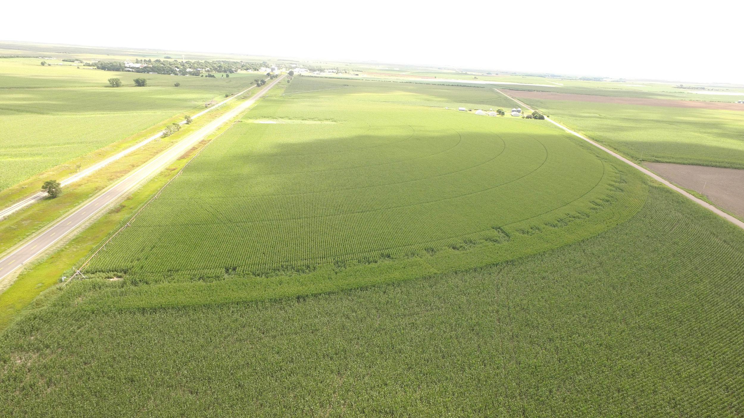 T irrigated 8.21 (5).jpg