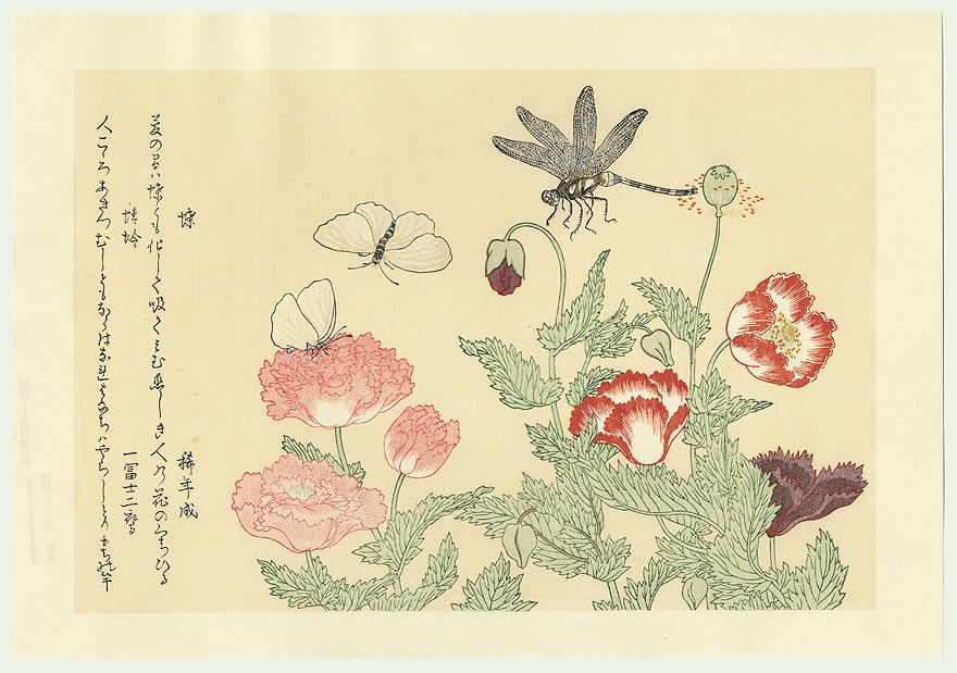 Dragonfly- Symbol of Transformation