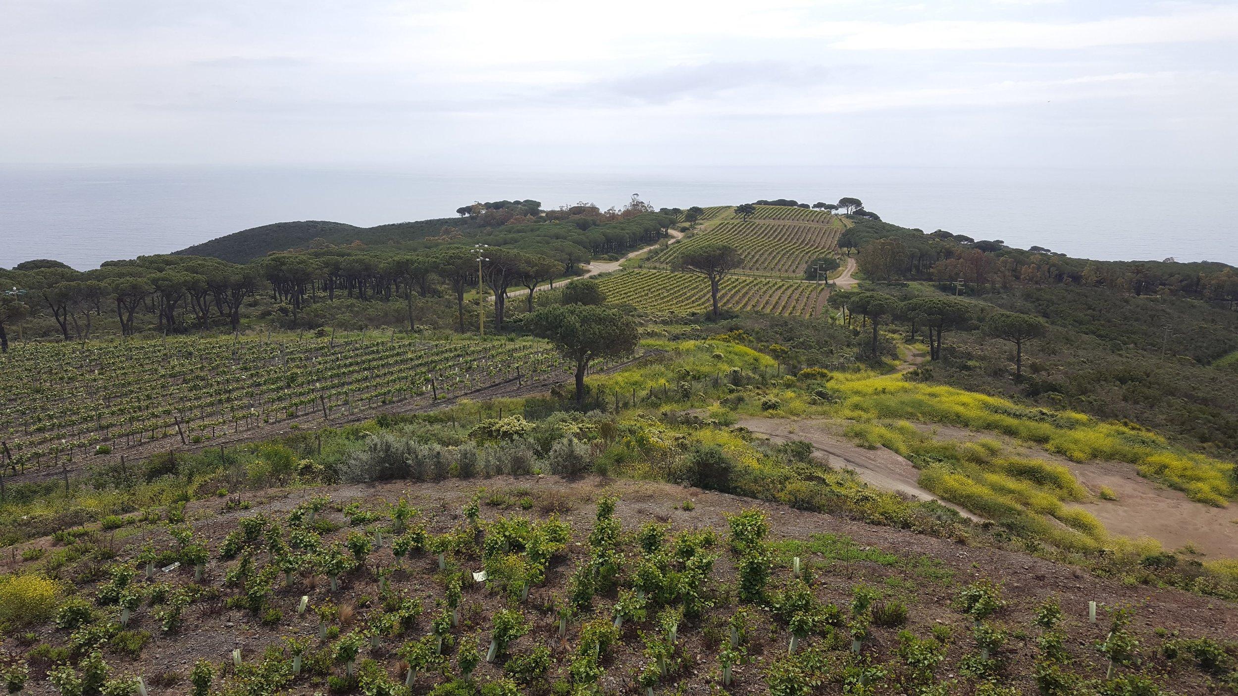 Vines!