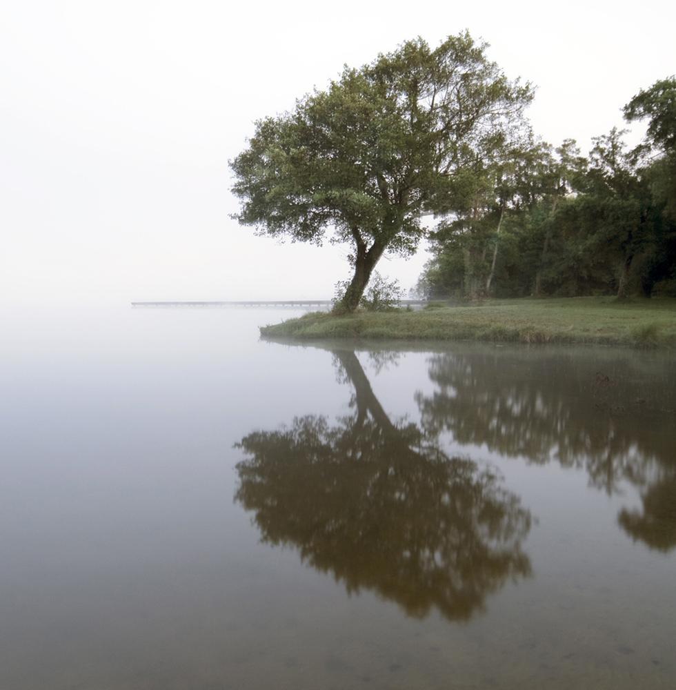 Misty-Tree.jpg