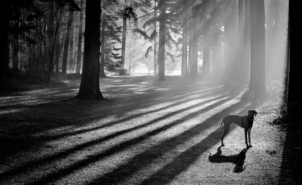 Hiding In The Shadows by Helen Rayner  Winner Mono DPI Open