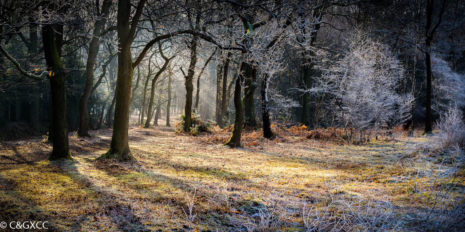 Path In The Woods by Barry Webb LRPS  Runner Up Millennium Place Trophy for Landscape - PDI