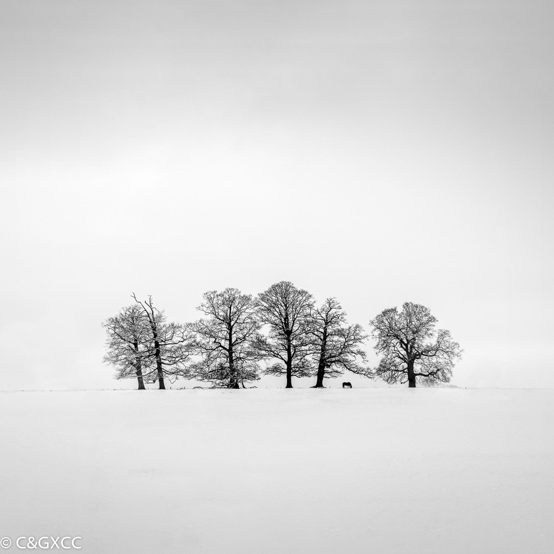Trees In The Snow by Barry Webb LRPS  Winner Mono PDI Open