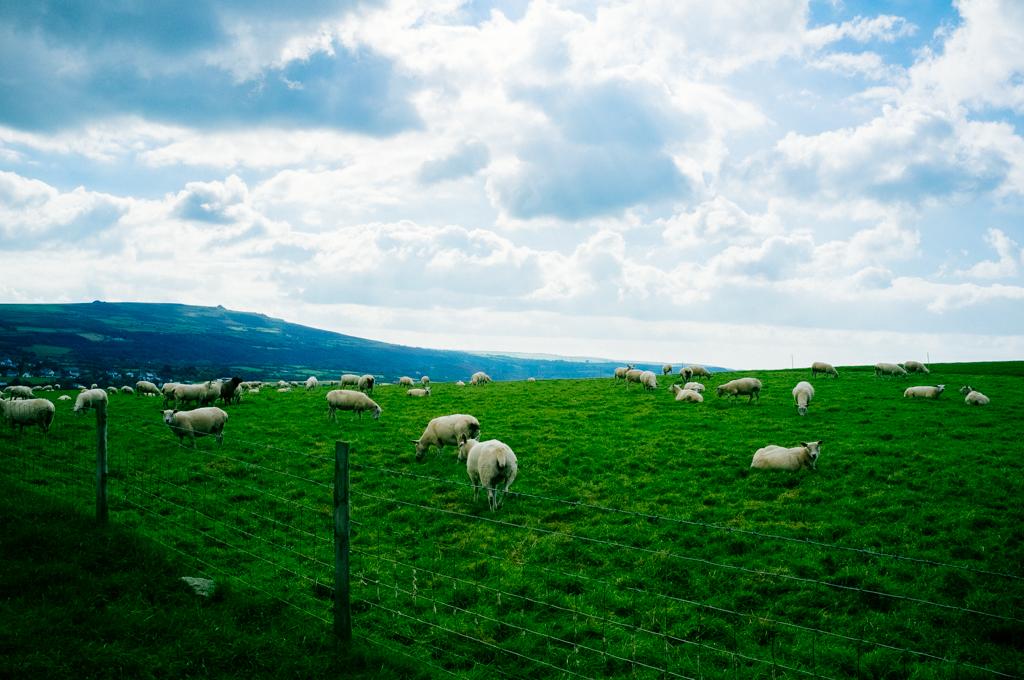 Wales-60.jpg